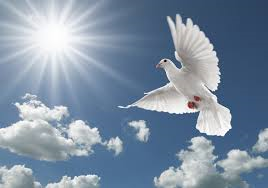 Dove, Love, Angel, Death, Passed Away, Dad, Father, Life, Opportunity, I Love You, Chances, Family, Loved Ones